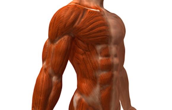 recovery from muscle damage